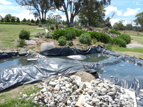 After volunteers had put in ponds, living systems, reptile homes etc