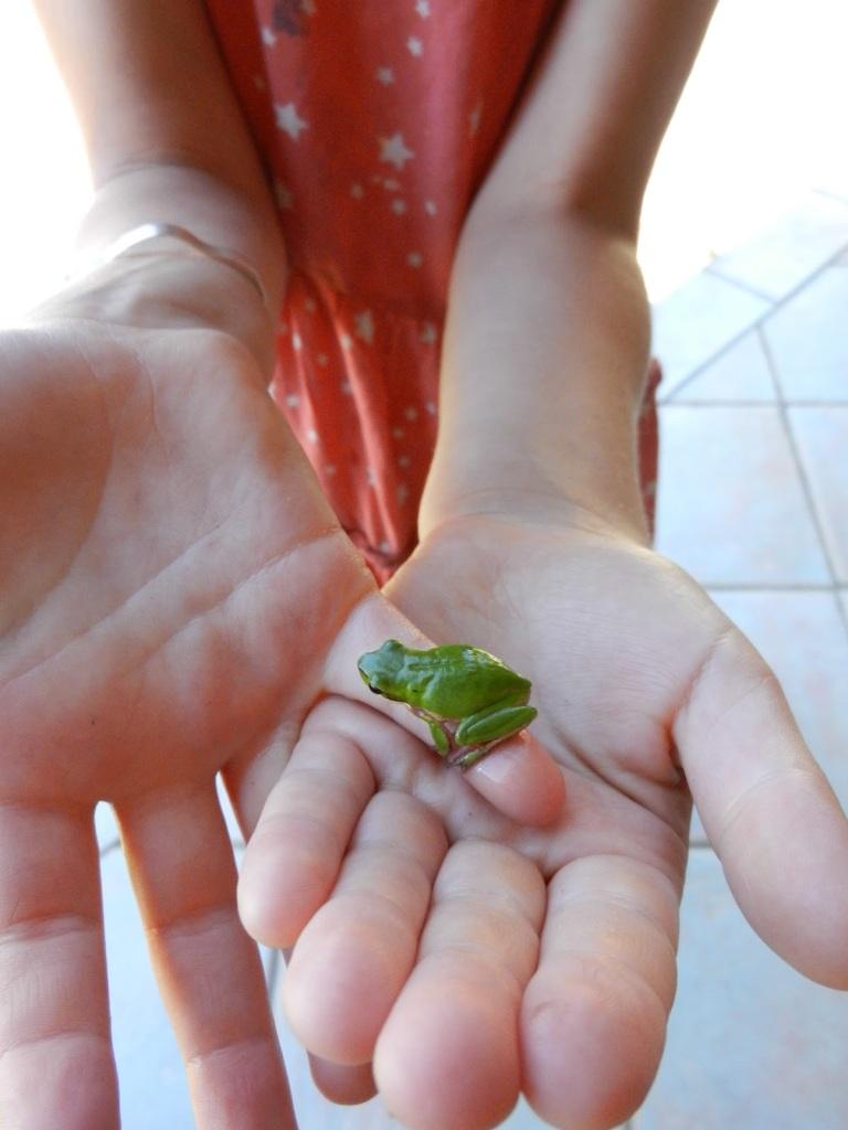 a small amphibian found near by