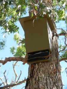 Nesting Box in place