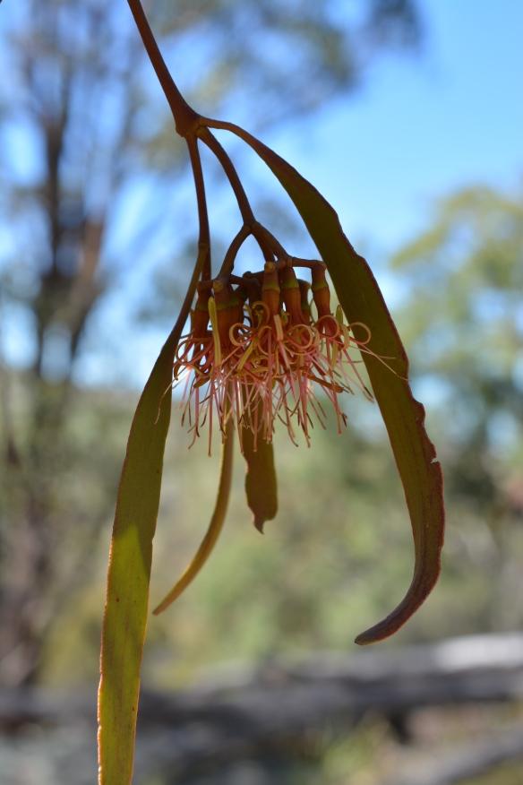 Mistiltoe flower