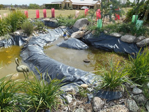 Reptile Heaven, 11 months on, lower pond