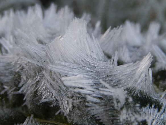 20140627 First frost - beautiful ice crystals, look like they have been licked