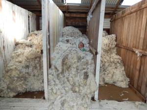 2014 shearing: Kids in the wool